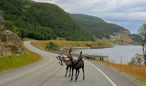 Внезапное препятствие на дороге